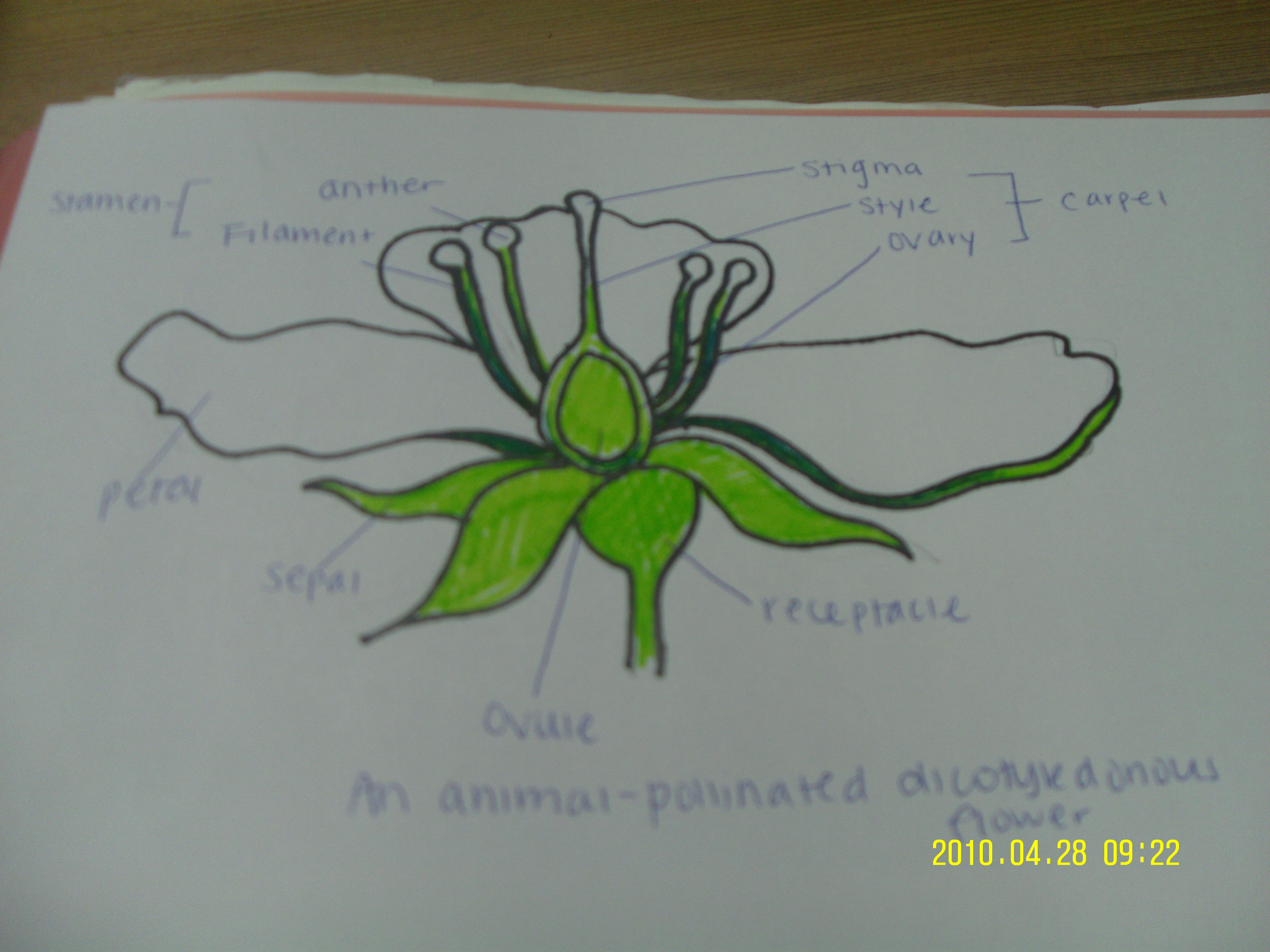 12knights is a dp biology wiki 931 draw and label a diagram 931 draw and label a diagram ccuart Gallery